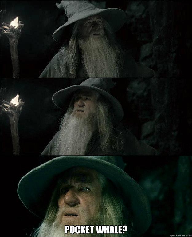 POCKET WHALE? -  POCKET WHALE?  Gandalf und das Spanischstudium