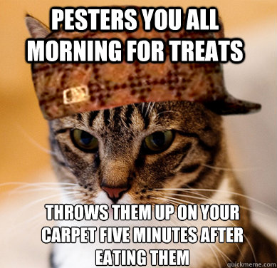 Pesters you all morning for treats Throws them up on your carpet five minutes after eating them