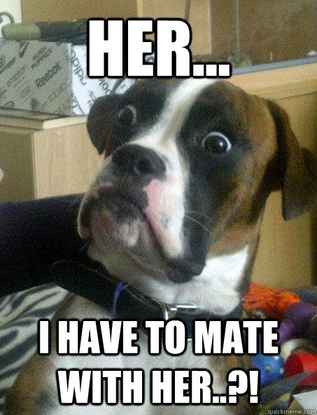 her... i have to mate with her..?! - her... i have to mate with her..?!  Baffled boxer