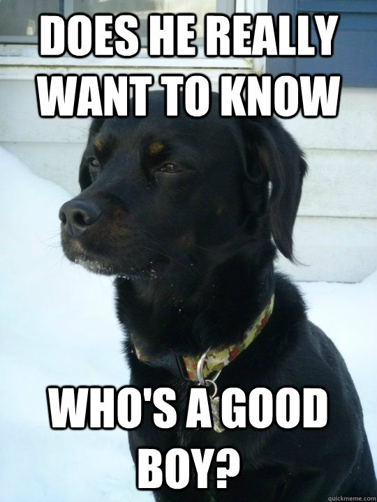 Does he really want to know Who's a good boy? - Does he really want to know Who's a good boy?  Philosophical Puppy