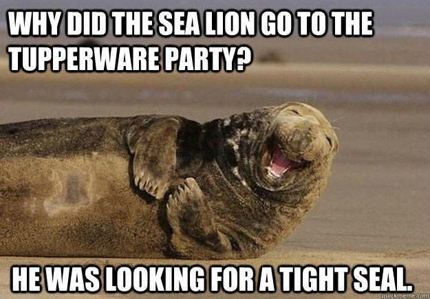 Why did the sea lion go to the Tupperware party? He was looking for a tight seal.   Sea Lion Brian