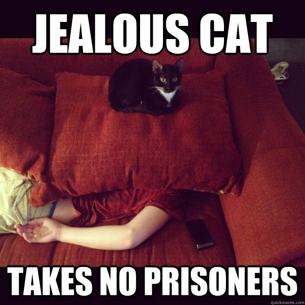 jealous cat takes no prisoners - jealous cat takes no prisoners  jealous cat