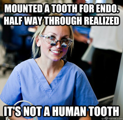 Mounted a tooth for endo. Half way through realized It's not a human tooth   overworked dental student
