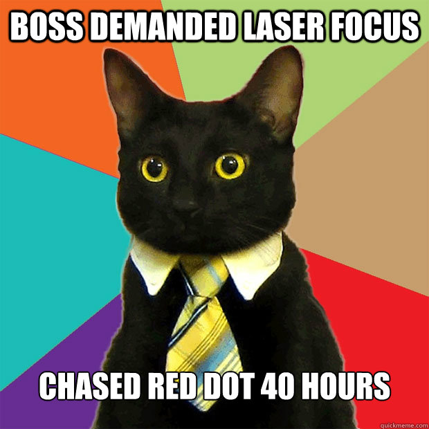 boss demanded laser focus chased red dot 40 hours - boss demanded laser focus chased red dot 40 hours  Business Cat