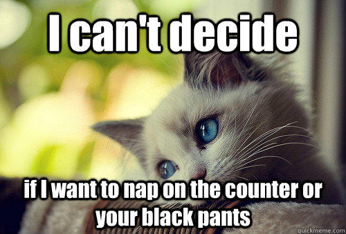 I can't decide  if I want to nap on the counter or your black pants