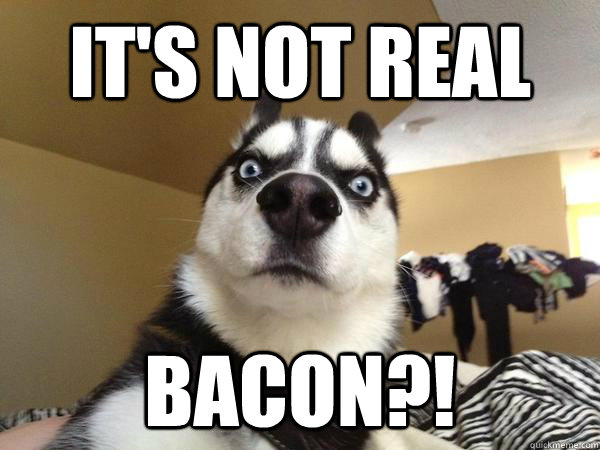 It's Not Real Bacon?! - It's Not Real Bacon?!  Shocked Dog