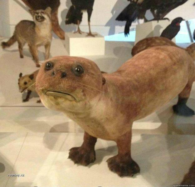 betrayed otter