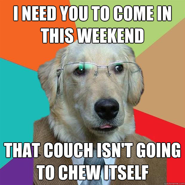I need you to come in this weekend that couch isn't going to chew itself