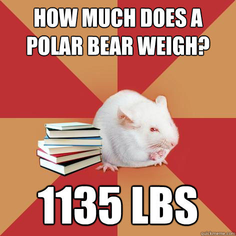 How much does a polar bear weigh? 1135 lbs  Science Major Mouse