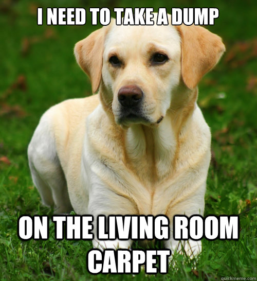 i need to take a dump  on the living room carpet - i need to take a dump  on the living room carpet  Dog Logic