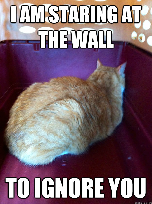 I am staring at the wall to ignore you - I am staring at the wall to ignore you  Wall Cat