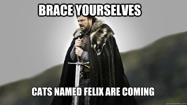 Brace yourselves Cats named Felix are coming - Brace yourselves Cats named Felix are coming  Ned stark winter is coming