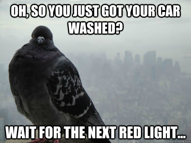 Oh, so you just got your car washed? Wait for the next red light...