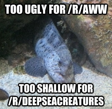 too ugly for /r/aww too shallow for /r/deepseacreatures