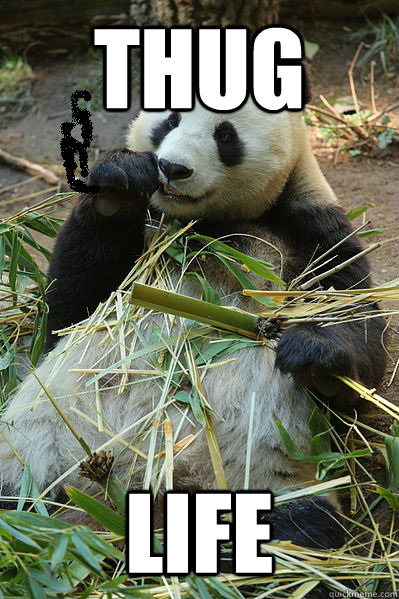 Panda Thug Life Memes Quickmeme