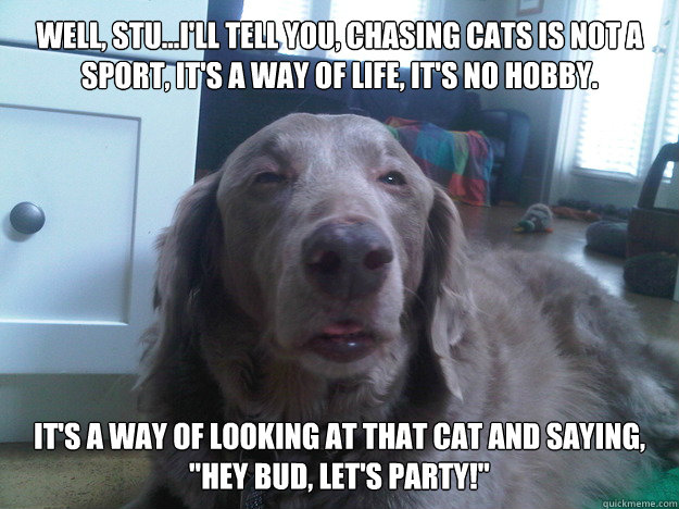 Well, Stu...I'll tell you, chasing cats is not a sport, it's a way of life, it's no hobby. It's a way of looking at that cat and saying,