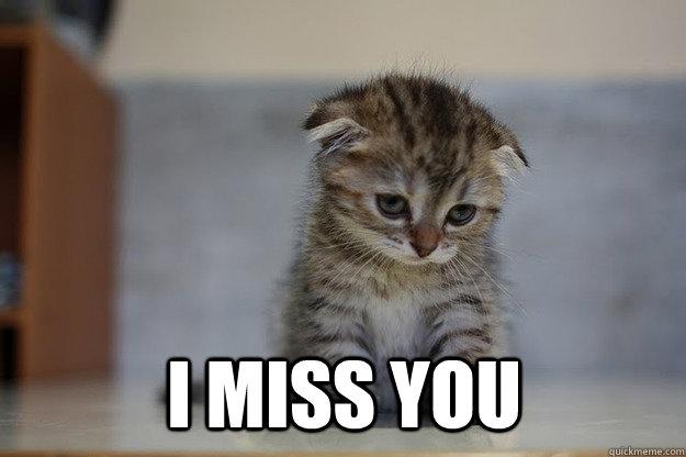 I miss you  Sad Kitten