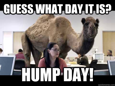 Guess what day it is? Hump Day!  hump day