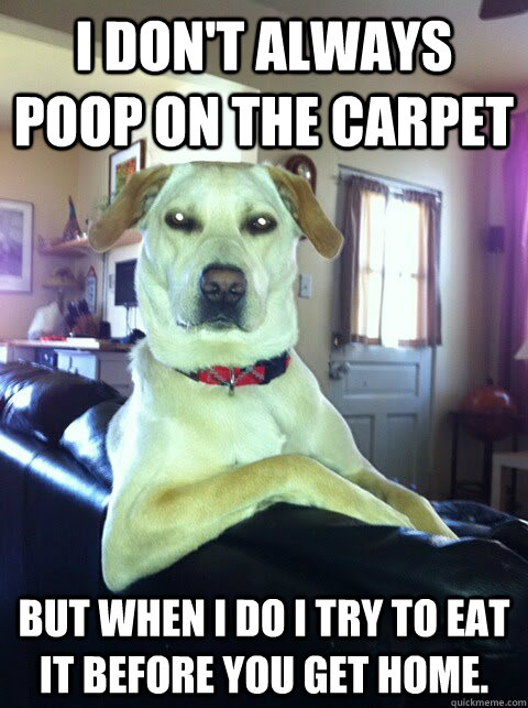 I don't always poop on the carpet But when I do I try to eat it before you get home.  Most interesting dog in the world