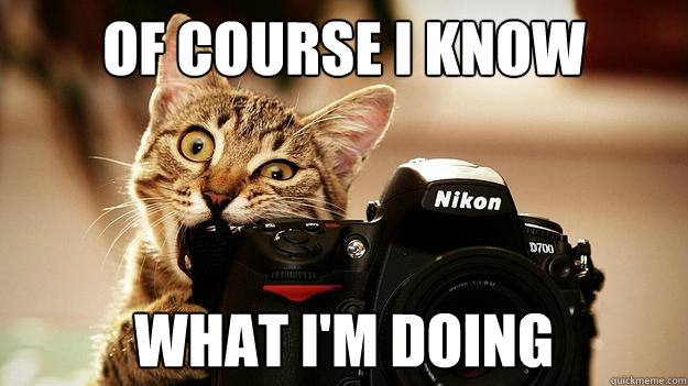 Of course I know What I'm doing - Of course I know What I'm doing  Nikon Cat