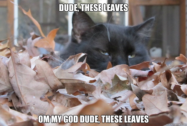 Dude, these leaves om my god dude, these leaves