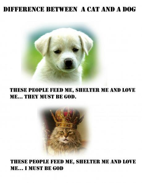 What a Dog Thinks Versus What a Cat Thinks -   Misc