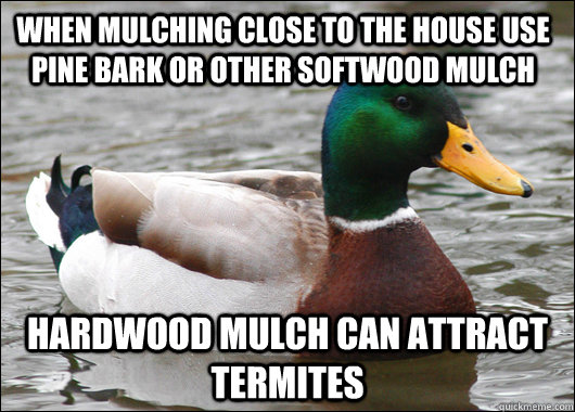When mulching close to the house use Pine Bark or other softwood mulch Hardwood mulch can attract termites  - When mulching close to the house use Pine Bark or other softwood mulch Hardwood mulch can attract termites   Actual Advice Mallard