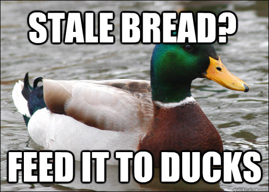 Stale Bread? feed it to ducks - Stale Bread? feed it to ducks  Actual Advice Mallard