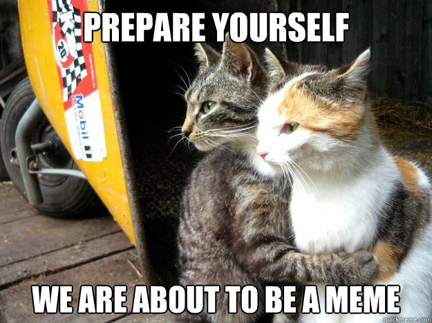 Prepare Yourself We are about to be a meme  - Prepare Yourself We are about to be a meme   Restraining Cat