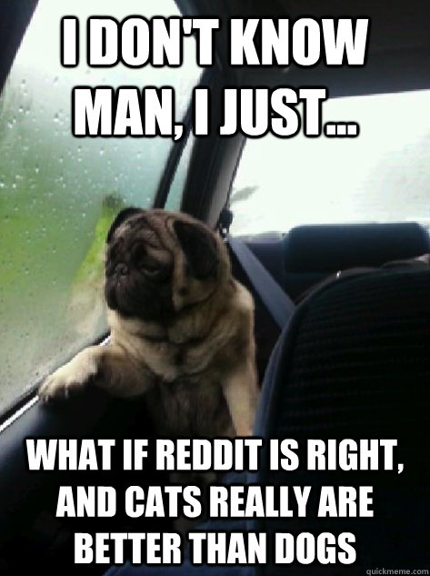 I don't know man, I just... what if reddit is right, and cats really are better than dogs - I don't know man, I just... what if reddit is right, and cats really are better than dogs  Introspective Pug