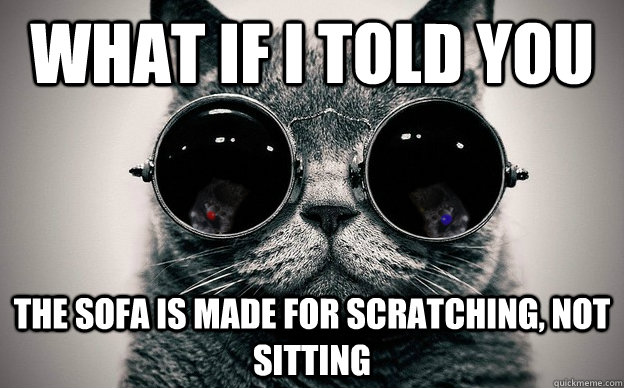 What If I Told You The Sofa Is Made For Scratching Not Sitting