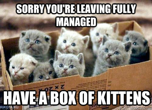 Sorry you're leaving fully managed Have a box of kittens  Box of Kittens