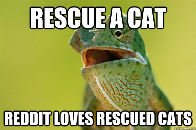 Rescue a cat Reddit loves rescued cats