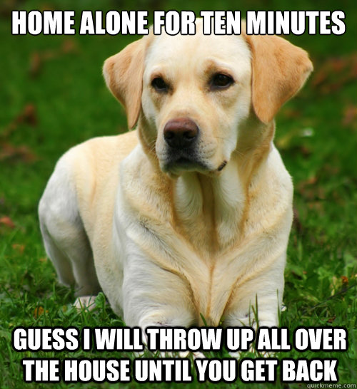 Home alone for ten minutes guess i will throw up all over the house until you get back - Home alone for ten minutes guess i will throw up all over the house until you get back  Dog Logic