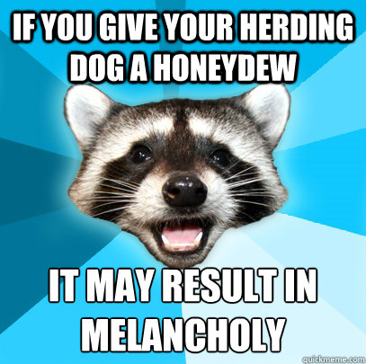 If you give your herding dog a honeydew it may result in melancholy - If you give your herding dog a honeydew it may result in melancholy  Lame Pun Coon