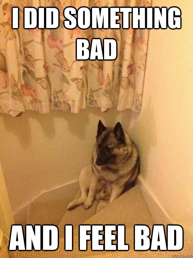 I did something bad and i feel bad - I did something bad and i feel bad  upset dog