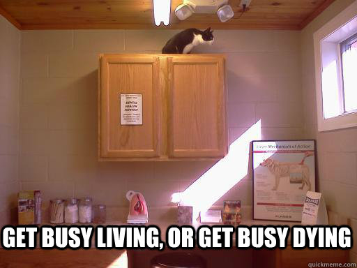 Get busy living, or get busy dying - Get busy living, or get busy dying  Escape Cat