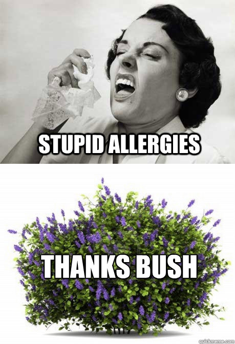 STUPID allergies THANKS BUSH - STUPID allergies THANKS BUSH  Misc