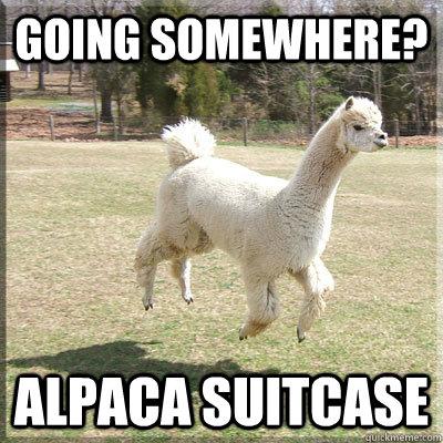 Going Somewhere? Alpaca Suitcase