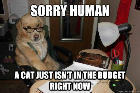 sorry human a cat just isn't in the budget right now - sorry human a cat just isn't in the budget right now  Financial Advice Dog
