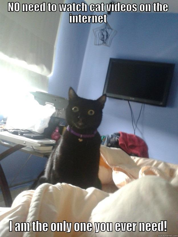 NO NEED TO WATCH CAT VIDEOS ON THE INTERNET I AM THE ONLY ONE YOU EVER NEED! overly attached cat