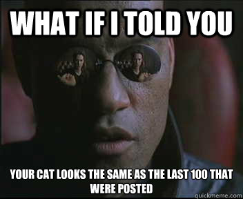 What if I told you your cat looks the same as the last 100 that were posted - What if I told you your cat looks the same as the last 100 that were posted  Morpheus SC