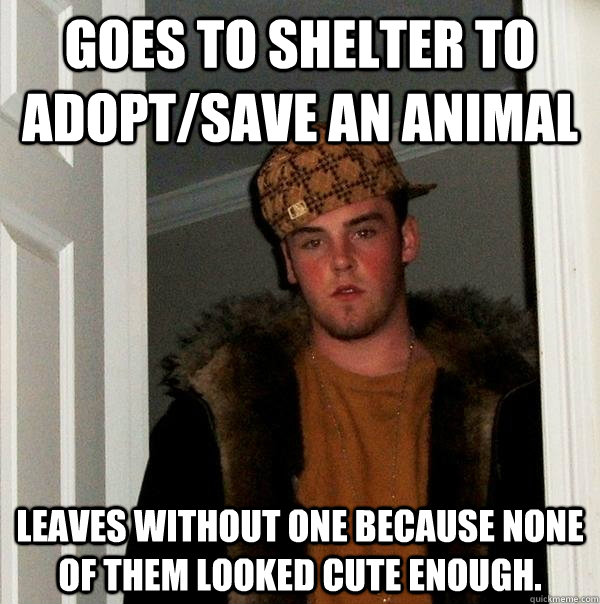 Funny Meme Pics Without Captions : Goes to shelter adopt save an animal leaves without one
