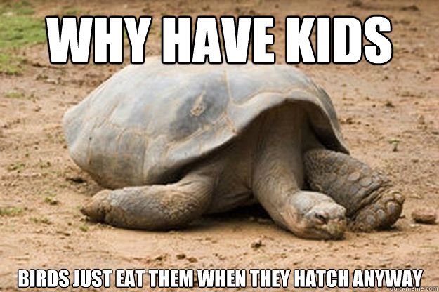 Why have kids Birds just eat them when they hatch anyway  Depression Turtle