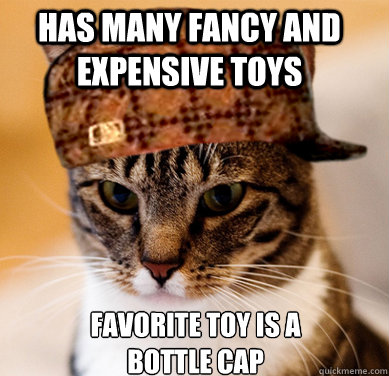 Has many fancy and expensive toys  Favorite toy is a bottle cap  Scumbag Cat