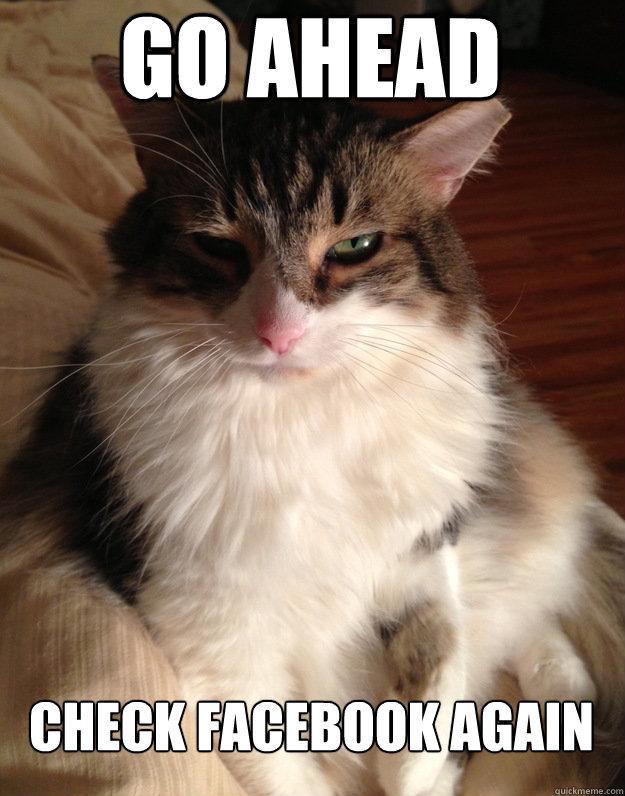 Go ahead check facebook again - Go ahead check facebook again  Judging Cat
