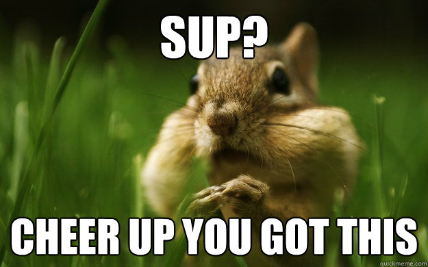 Funny Memes To Cheer Up Your Friend : Cheer up chipmunk memes quickmeme