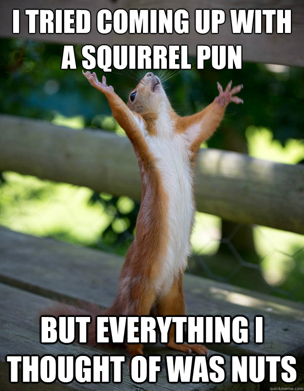 I tried coming up with a squirrel pun but everything i thought of was nuts - I tried coming up with a squirrel pun but everything i thought of was nuts  Preacher Squirrel