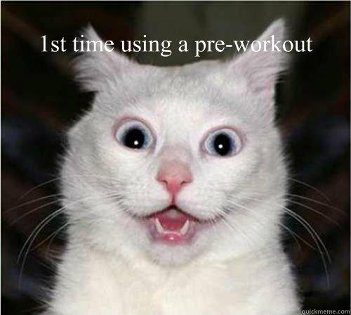 3d44107c0175adb80a11badce925ea6989f350f032f9acd58222ca156fec4add pre workout cat memes quickmeme