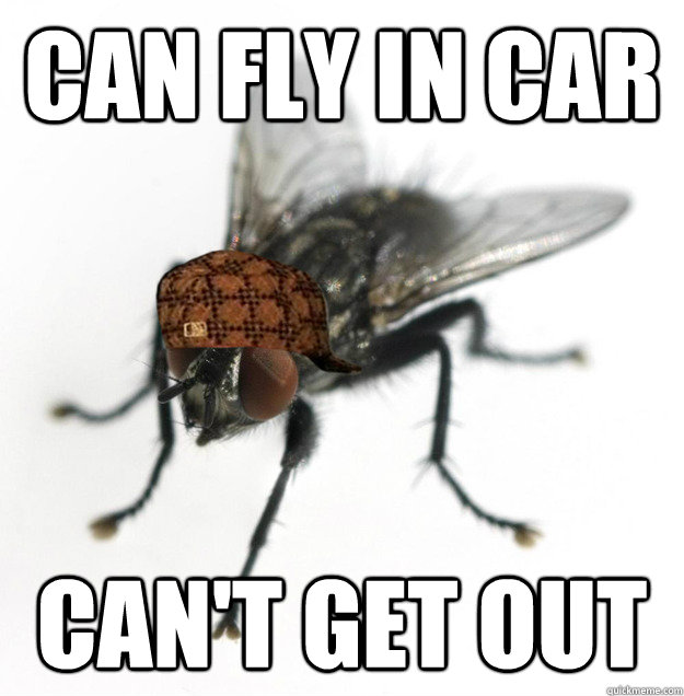 can fly in car can't get out - can fly in car can't get out  Scumbag Fly